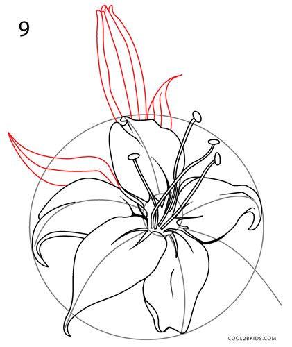 Lilien Zeichnen