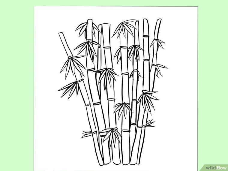How To Draw Bamboo 8 Steps With Pictures Bamboo Drawing Tree Drawing Tree Drawing Simple