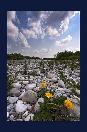 Leben wächst aus Steinen | Flickr - Photo Sharing!