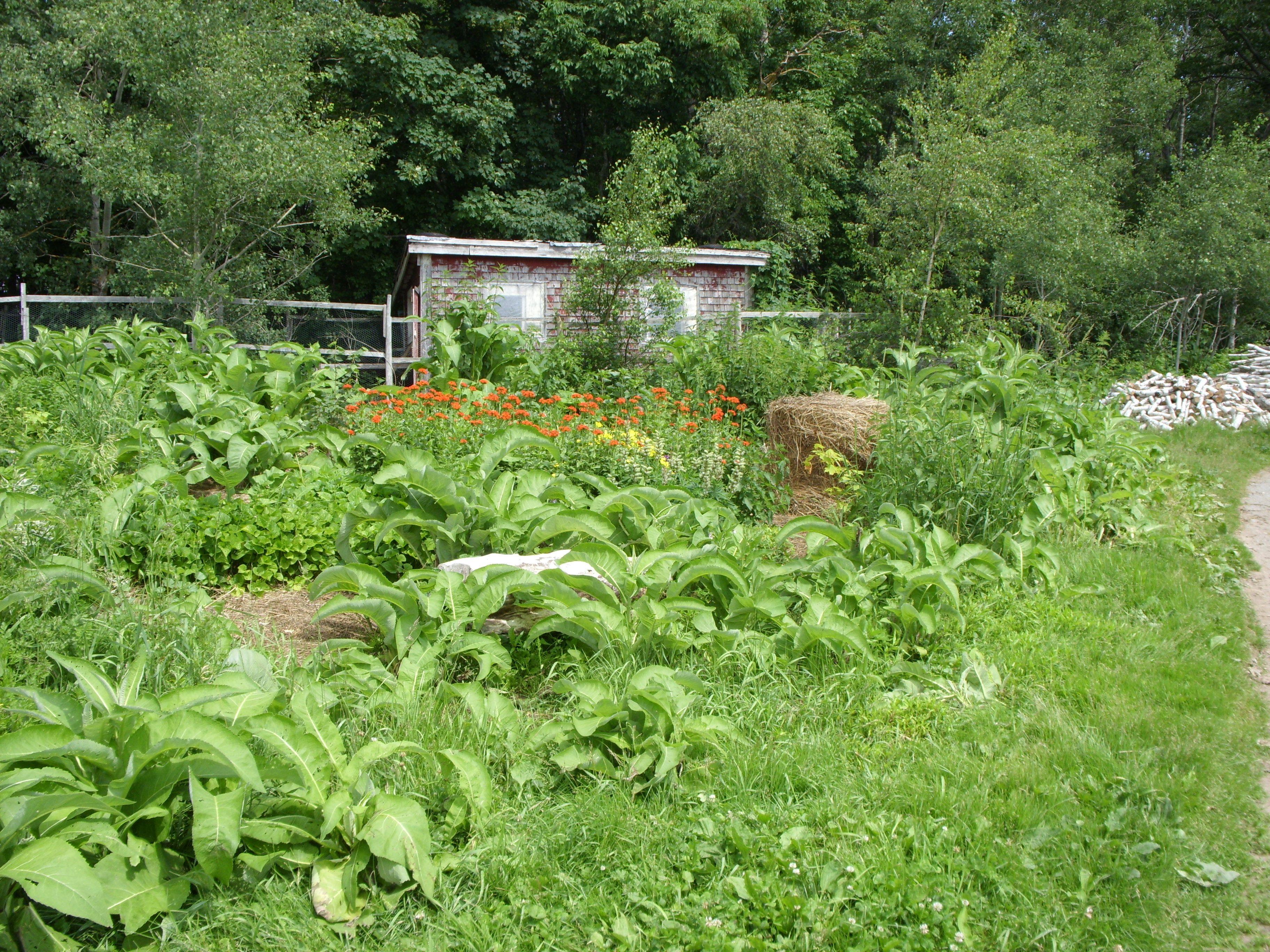 Permaculture Home | Permaculture, Permaculture farming ...