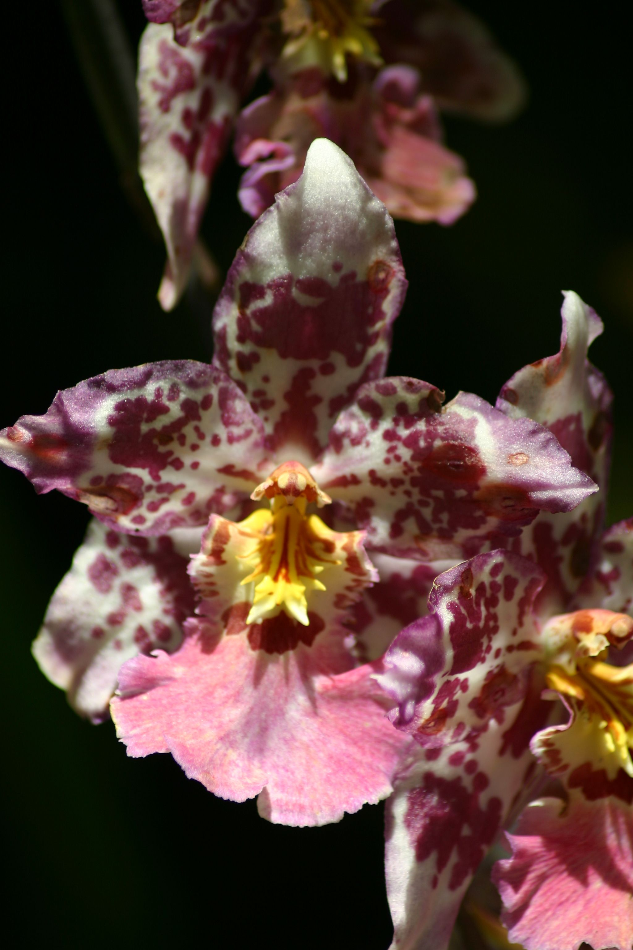 The meaning of the flower: an orchid is a symbol of love and passion