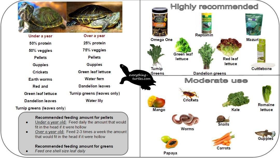 Food chart for RES turtle Our Growt care info