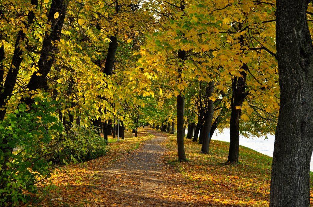 остров Елагин.  Осень / otoño en San Petersburgo