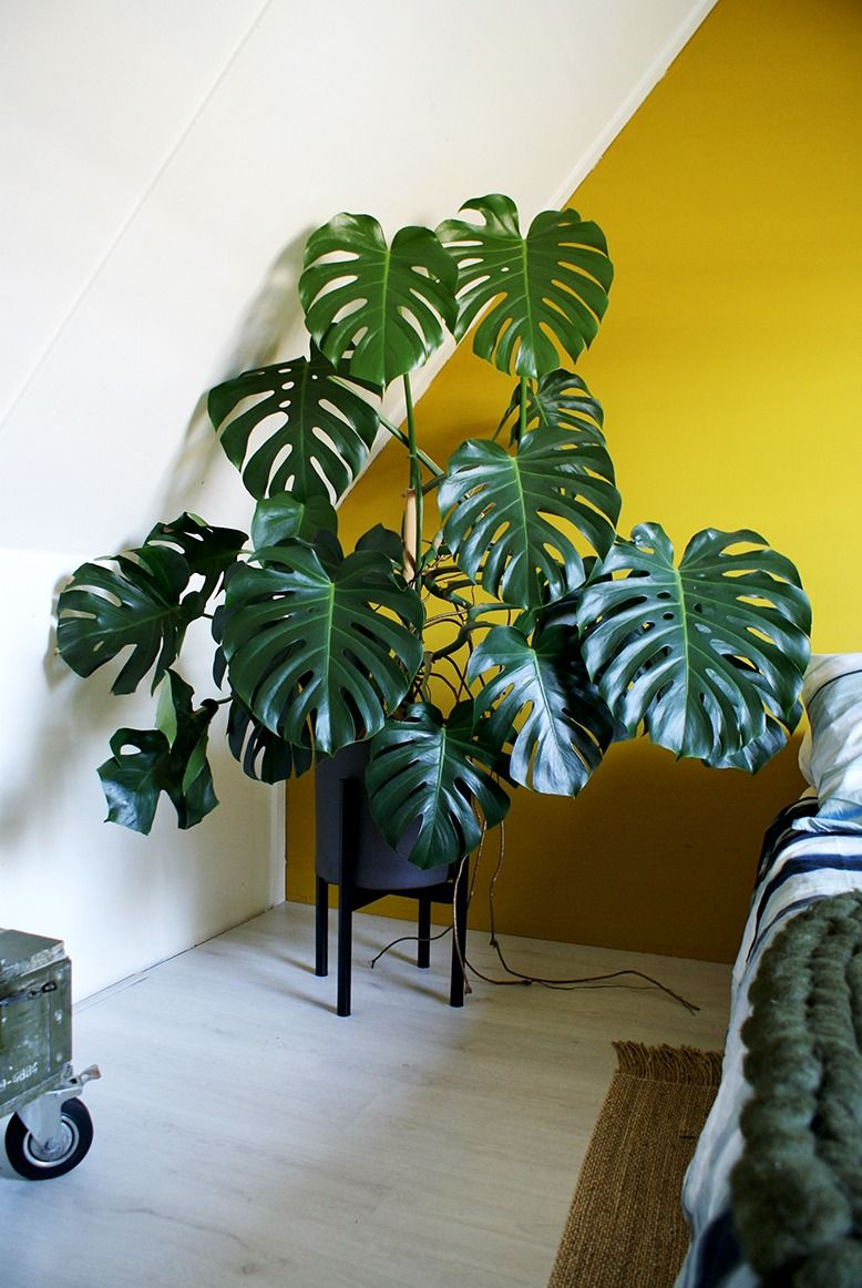 Monstera Meeting A Retro Mid Century Planter Give Your Plant A Boost And Give It The Place It Deserves Up House Plants Decor Plant Decor Mid Century Planter