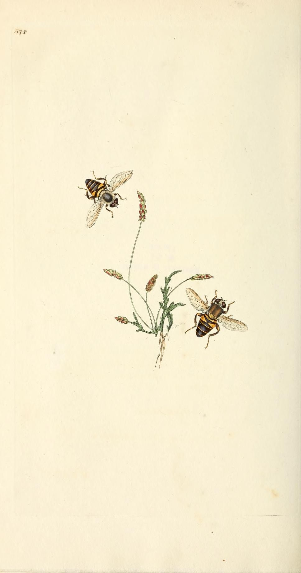 Photo of v. 16 (1813) – The natural history of British insects : – Biodiversity Heritage Library