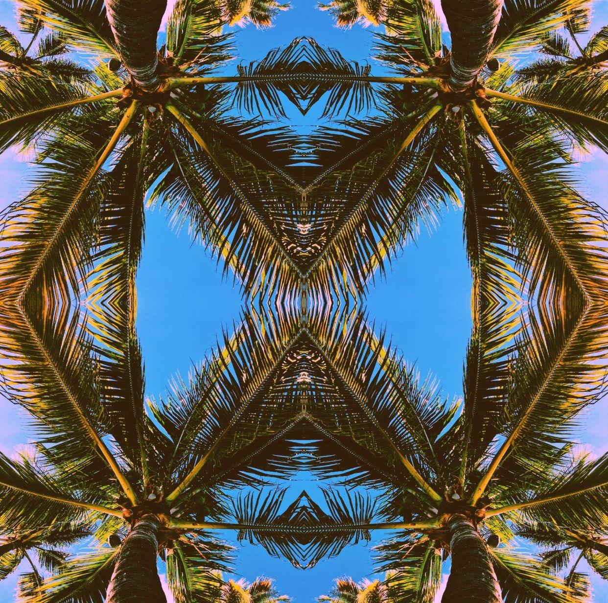 Palm tree daze #islandcompany #whatiswinter #palmtrees #escape