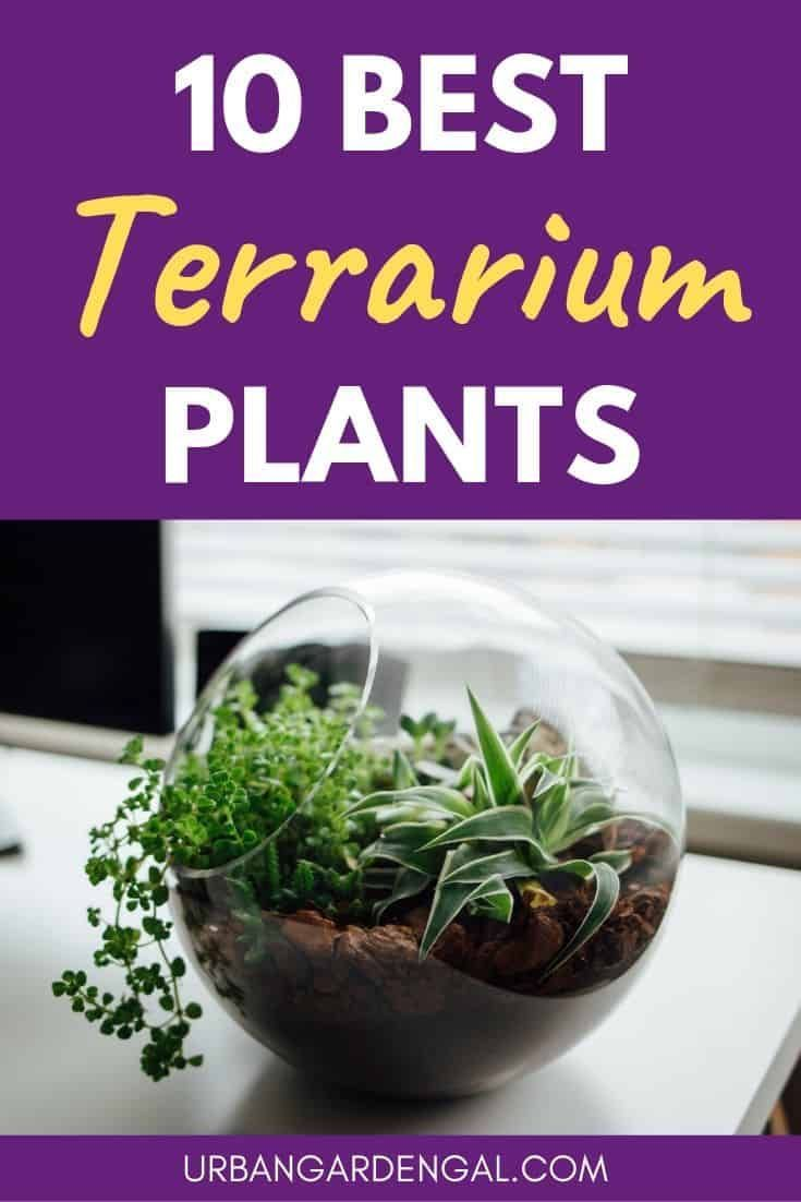 10 Best Terrarium Plants Best Terrarium Plants  These indoor plants will thrive in a terrarium environment