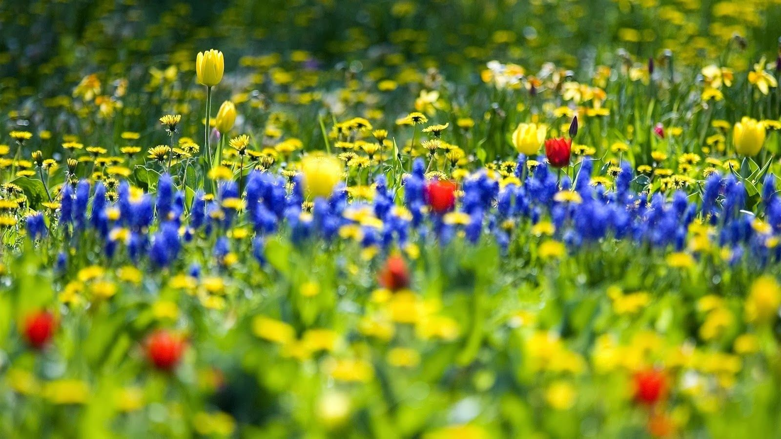 Top Hd Nature Scene Wallpapers Soft Wallpapers Seed Bombs Spring Wallpaper Spring Wildflowers