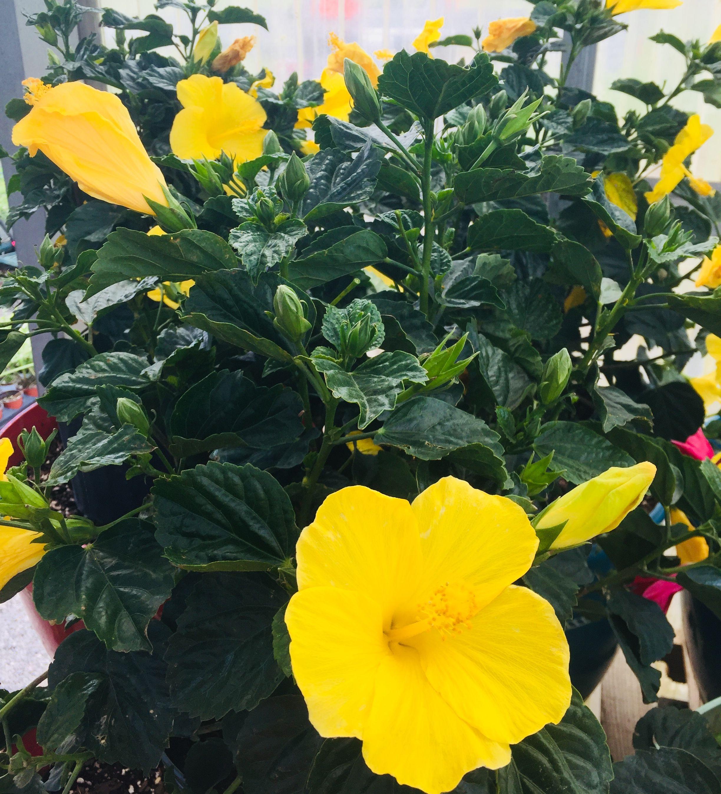 Pretty Yellow Flowers Natureflowers Pinterest Yellow Flowers