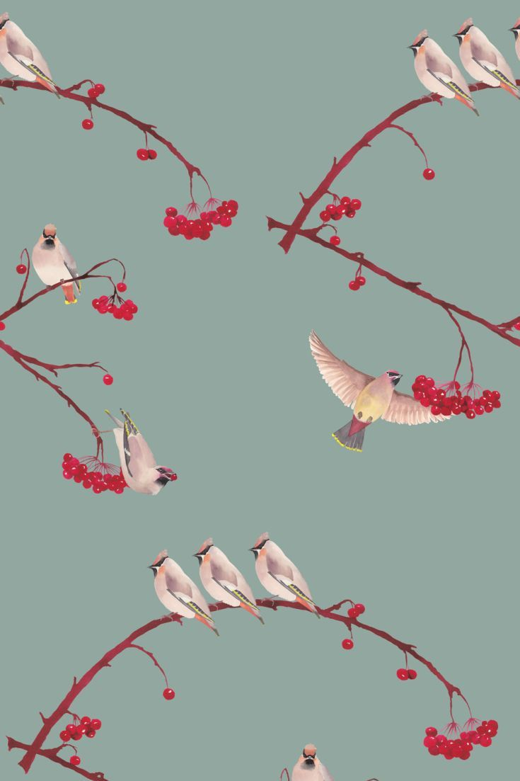 Wonderful Bright Fresh New Collection By Petronella Hall Featuring Vibrant Pattern And Colour With A D With Images Bird Wallpaper Bedroom Bird Wallpaper Pattern Wallpaper