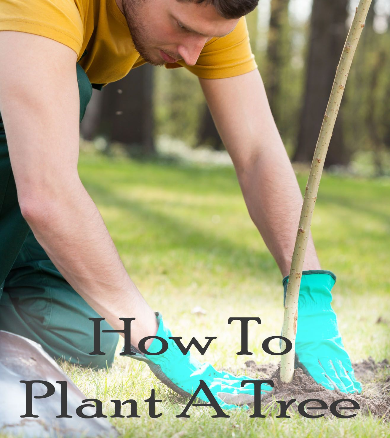 How To Plant A Tree | Trees to plant, Plants, Garden trees
