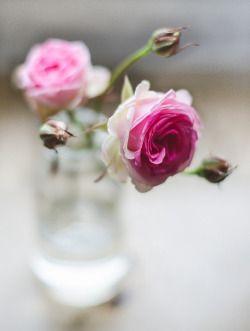 Fresh cut roses in a little vase