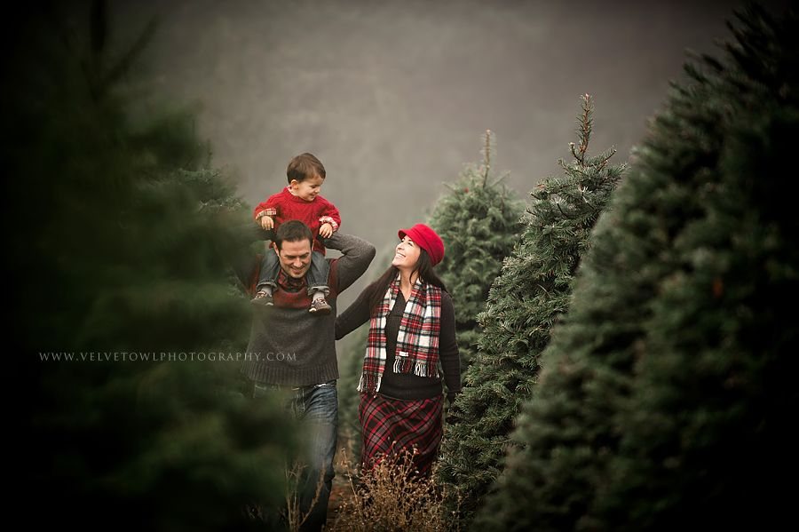 It S Almost Here Thank You For Stopping By Much Love Happiness To You H Christmas Tree Farm Photos Christmas Tree Farm Photo Shoot Tree Farm Photo Shoot