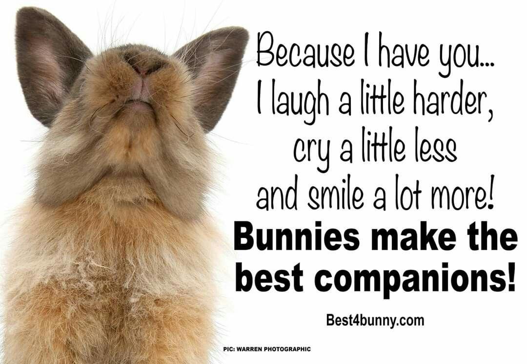 Pin by Marissa Grenon on Bunny Quotes   Bunny, Bunny quotes, Companion