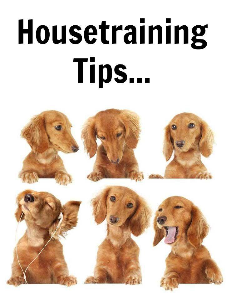 Doggy Dan S Kind Gentle Dog Training Method Dachshund Dog