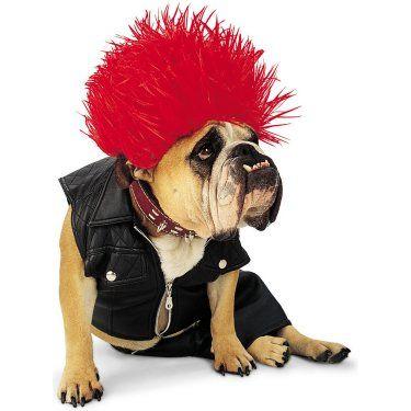 punk dog