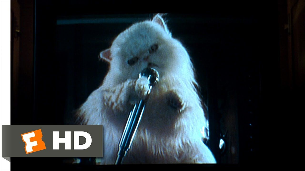 Clip 9 Best Of Cats Dogs 9 10 Movie Clip Mr Tinkles Ransom Video 2001 Hd In 2020 Dog Movies Dog Cat Cat Watch