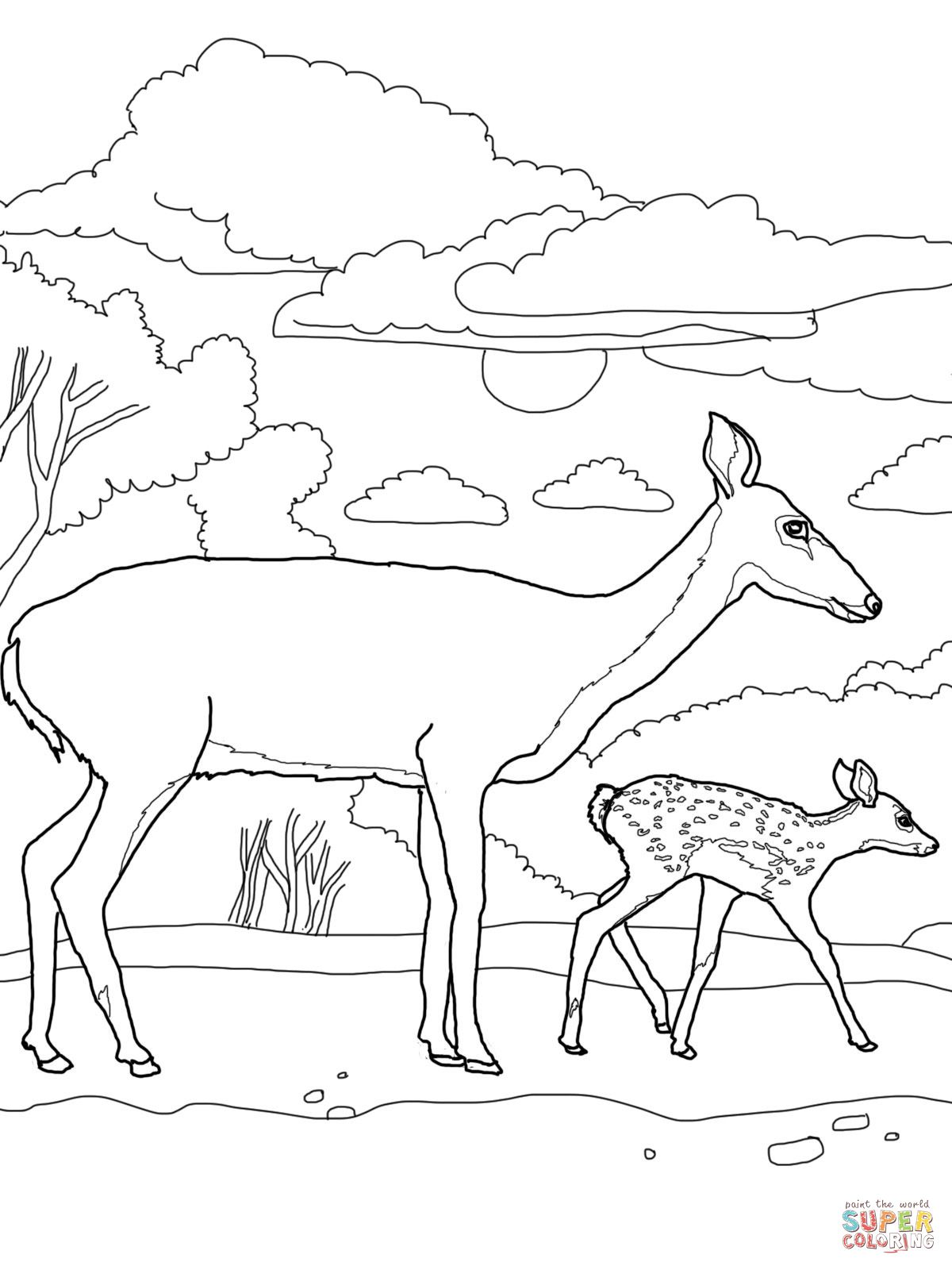 White Tailed Deers Coloring Pages Supercoloring Com Deer Coloring Pages Horse Coloring Pages Animal Coloring Pages