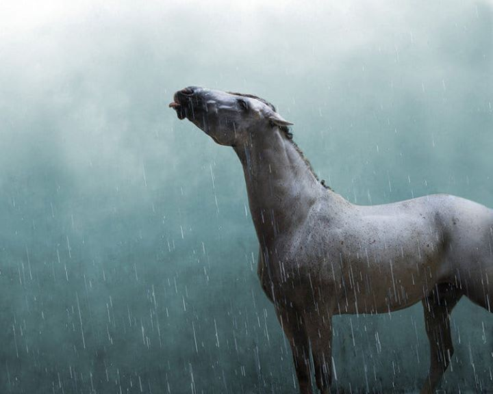 Bajo la lluvia un corcel