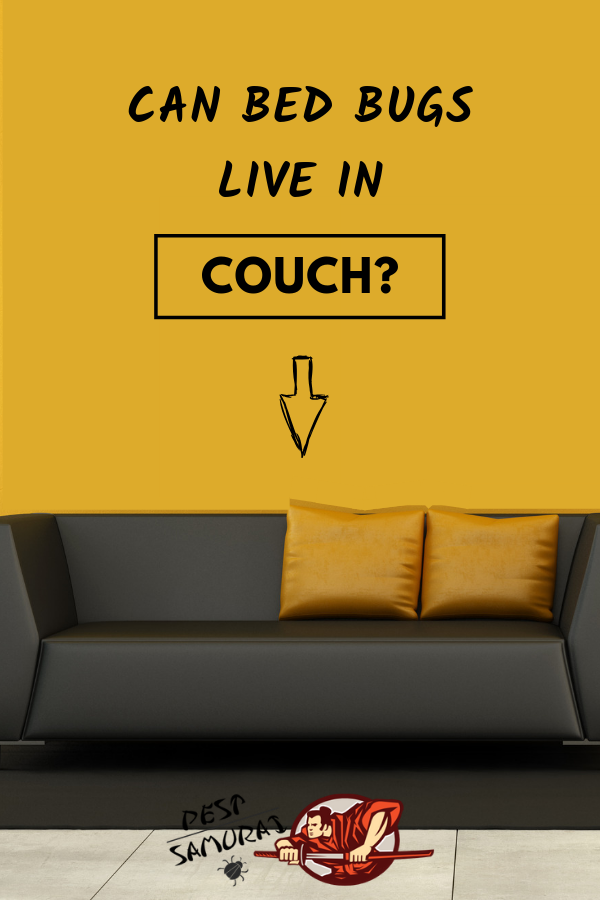 In this article, we will talk more about bed bugs in couch