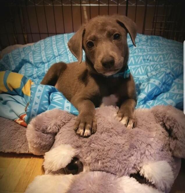 Pin by Ross Wilson on MegaJewelStore.Com   Foster puppies ...