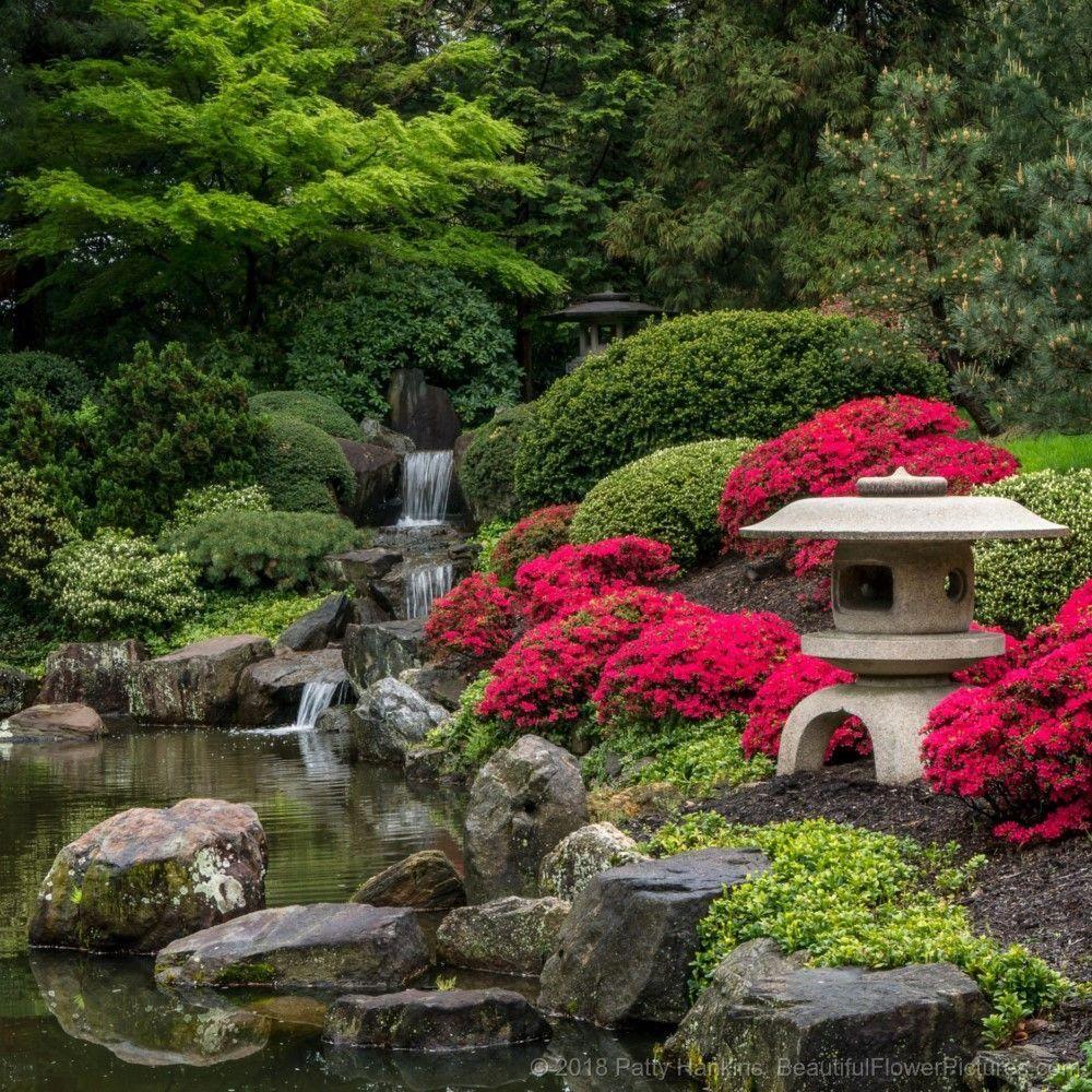 Japanese Gardening Jardin Asiatique Jardin Japonais Jardin Zen