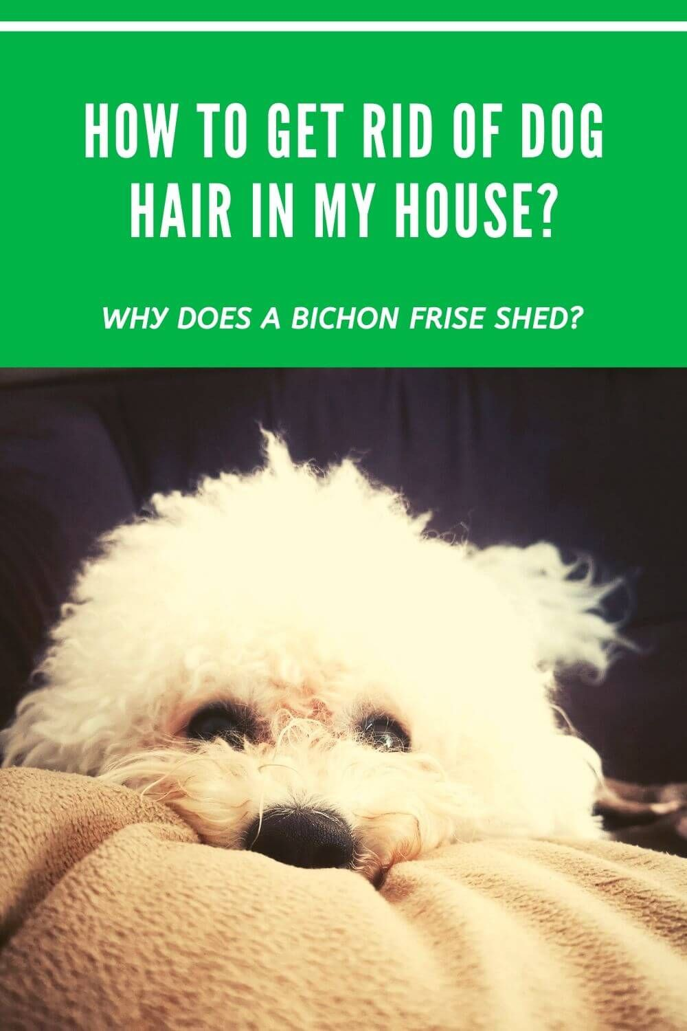 b7950fd7bd7b4be52d18c5010c6f0d73 - How To Get Rid Of Dog Fur In House