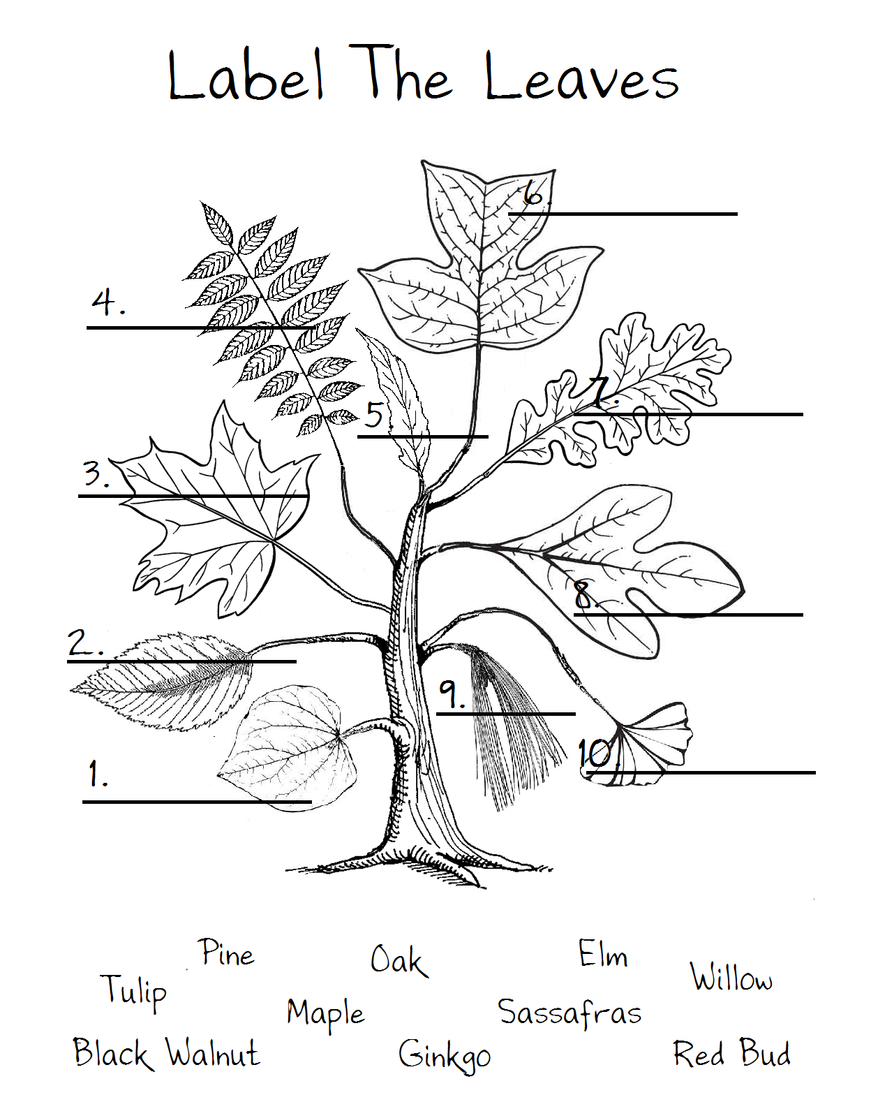 1 Red Bud 2 Elm 3 Maple 4 Black Walnut 5 Willow 6 Tulip 7 Oak 8 Sassafras 9 Pine 10
