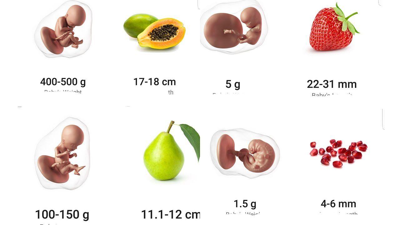 Como es un bebe a las 18 semanas de embarazo
