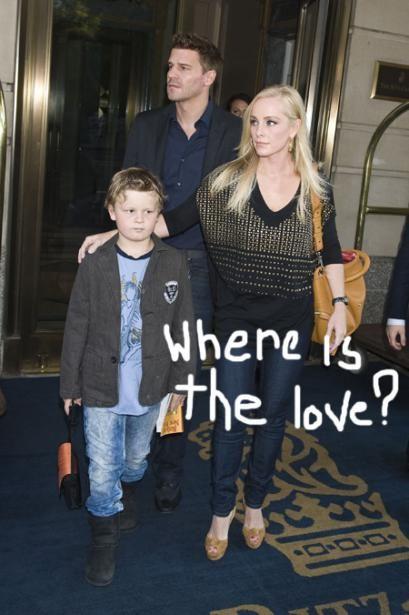 David Boreanaz Family - Bing images (With images)   David ...