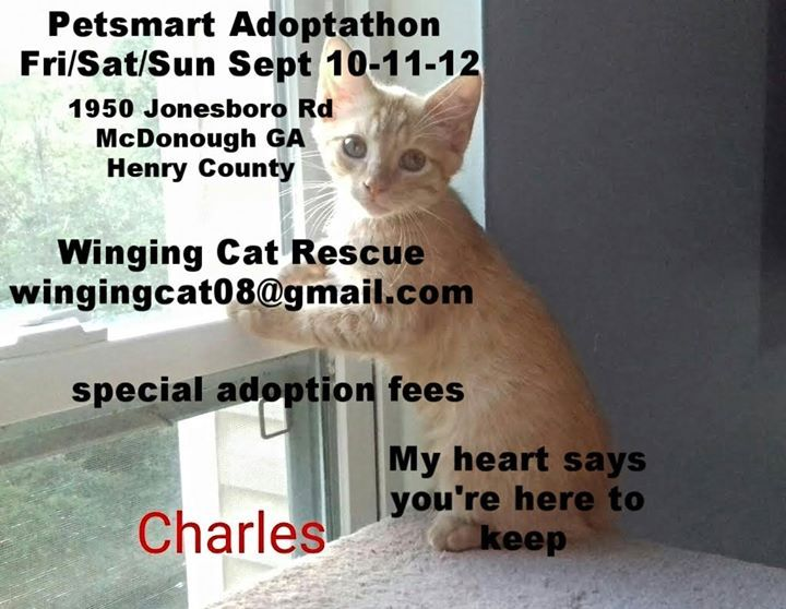 Come On And See About Me Kittens Cats Petsmart All Weekend Long Fri Sat Sun Sept 10 11 12 Adoptathon Mcdonough Ga In Henry C Cat Rescue Cats Rescue