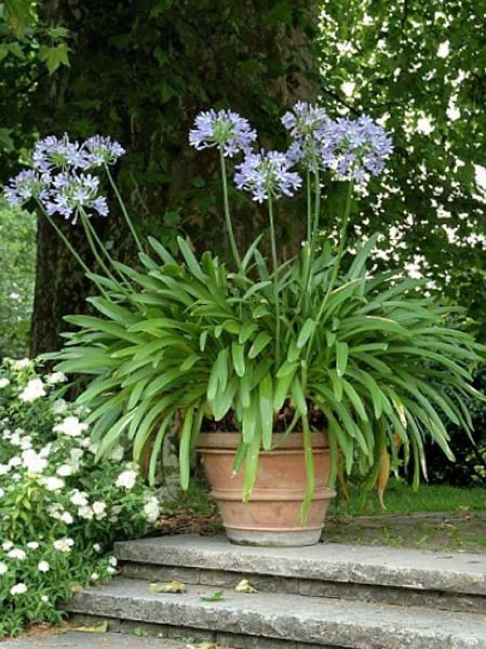garten f r faule viel spa wenig arbeit garten pinterest garden herb garden and. Black Bedroom Furniture Sets. Home Design Ideas