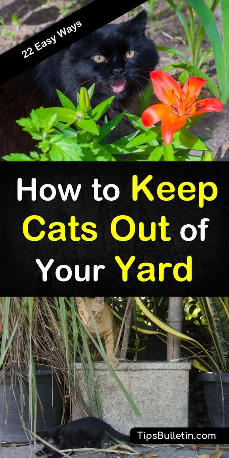 How to Keep Cats Out of Your Yard - 22 Easy Ways | Cat ...