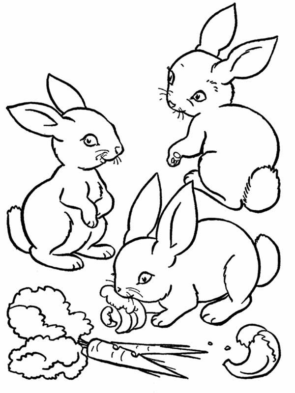 Pin Di Bunnies Coloring Pages