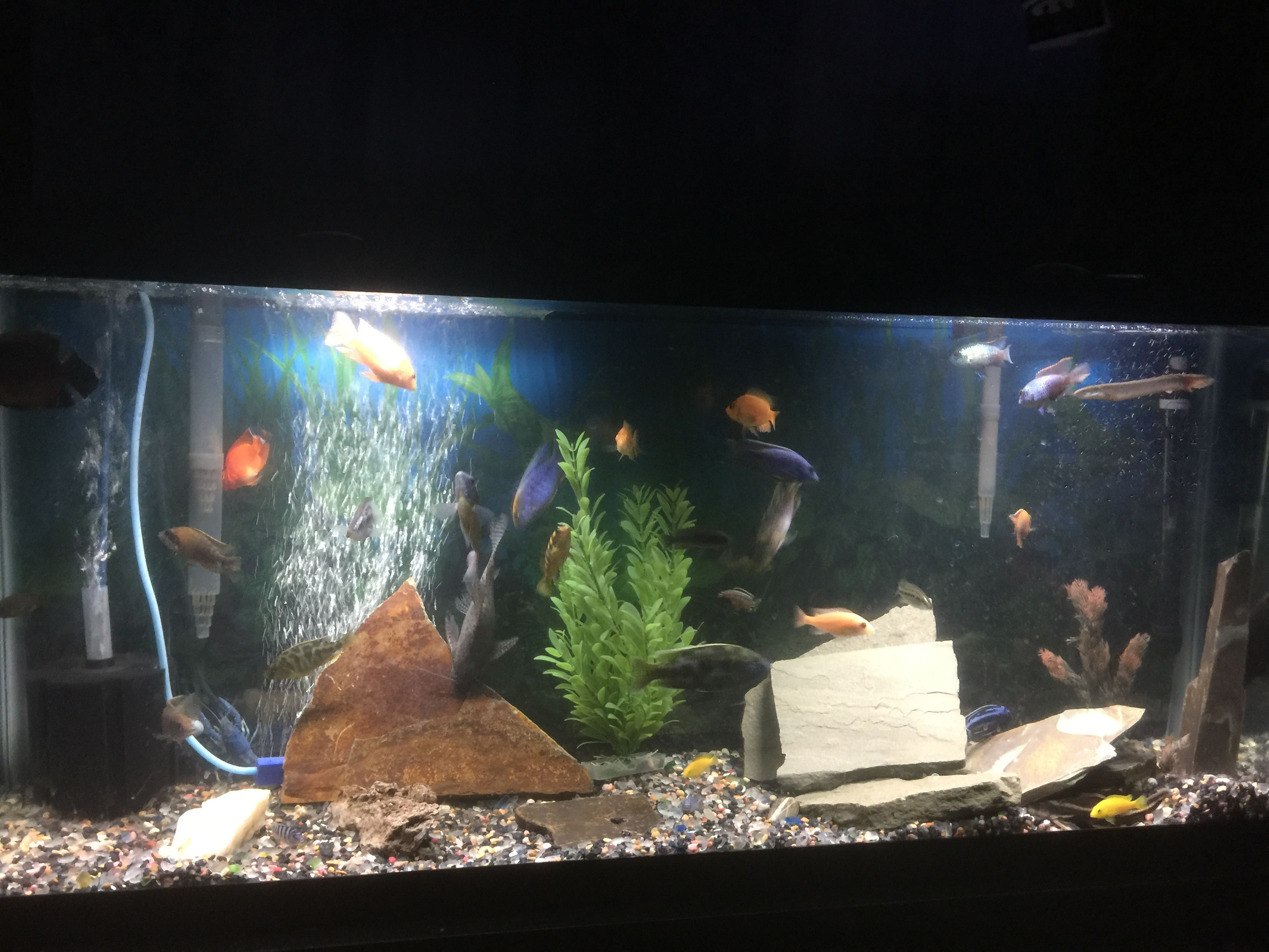 Thought you guys might like to see my tank aquariums pinterest