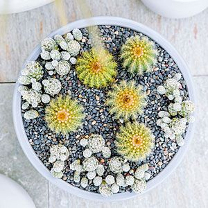 Miniature Desert Garden - Container Designs with Succulent Plants - Sunset Mobile