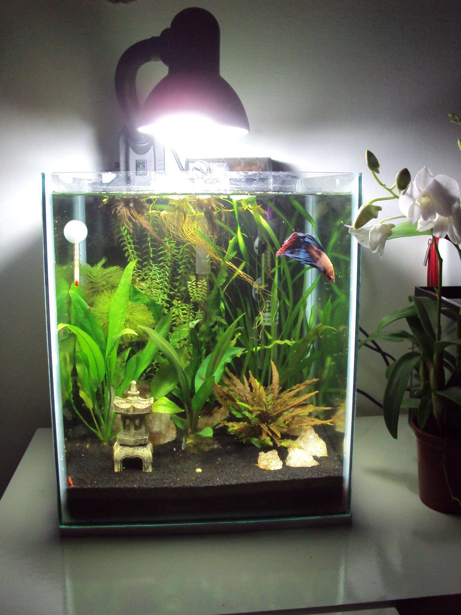 Fish Tank, Betta Fish Care, Fish