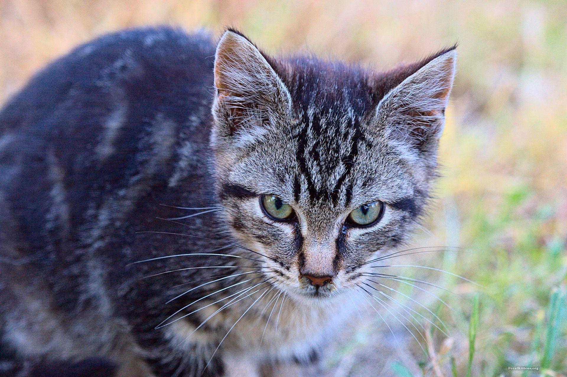 Pet project chriss pagani art animal projects pets