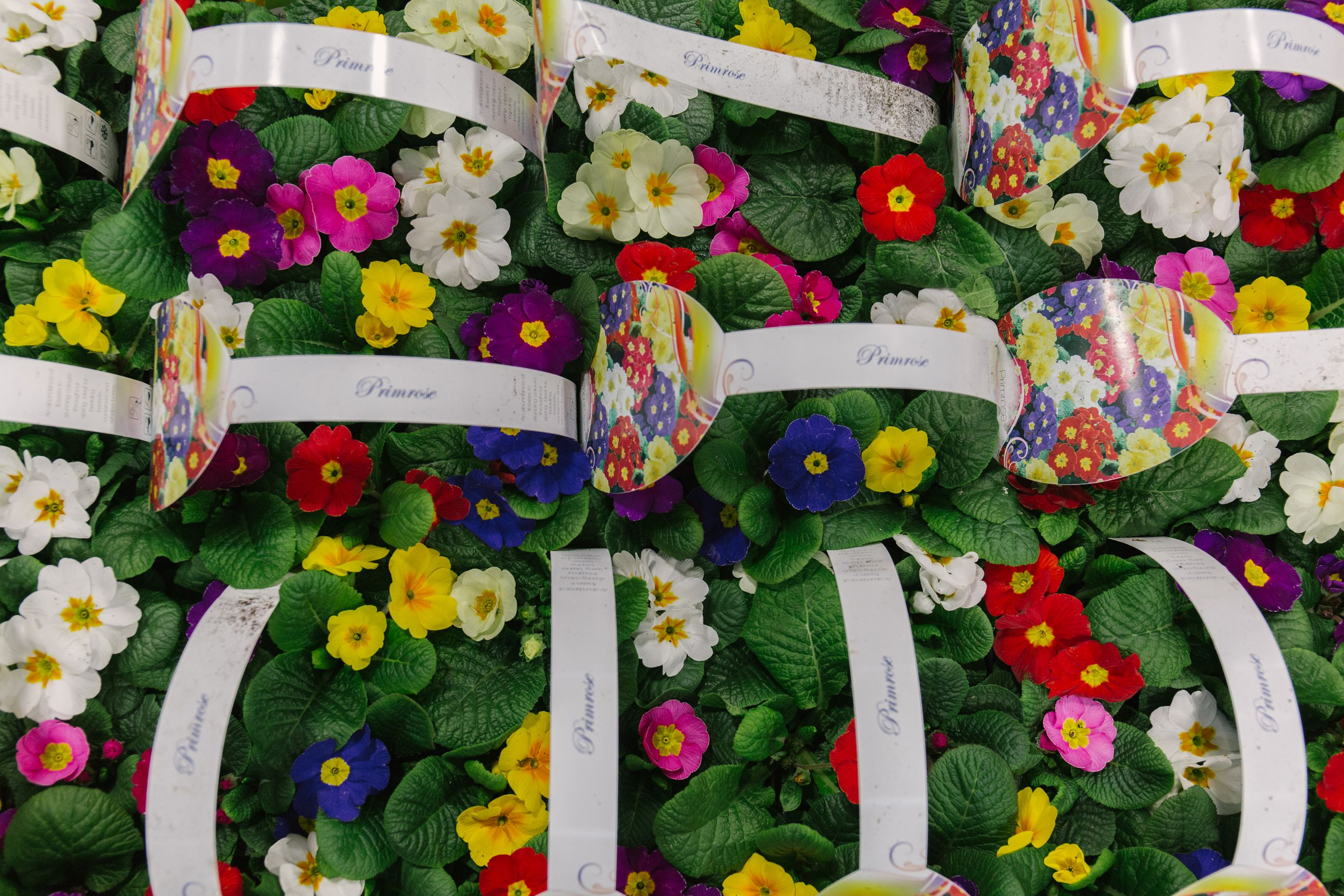 In season at the Flower Market this March New Covent