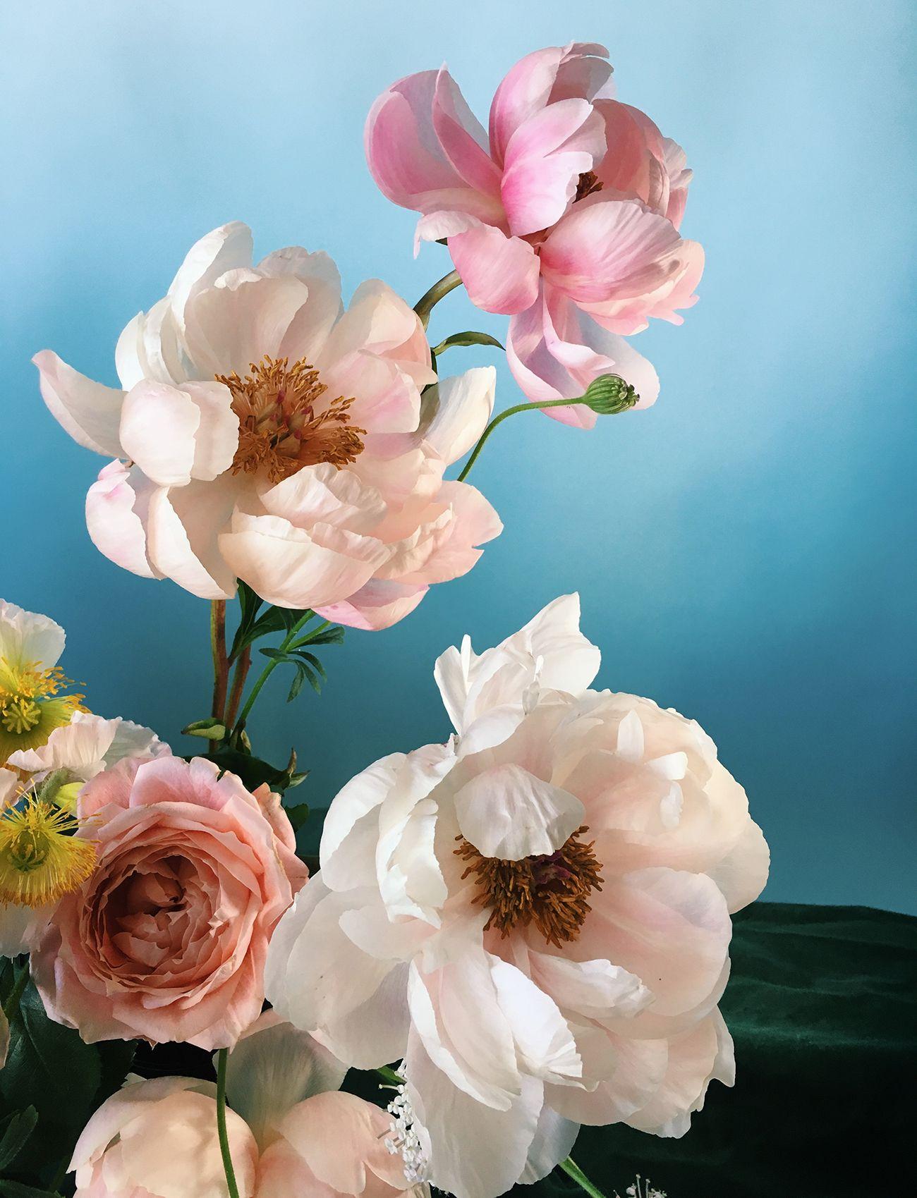 Meet the Florist Behind Instagrams Dreamiest Still Lifes
