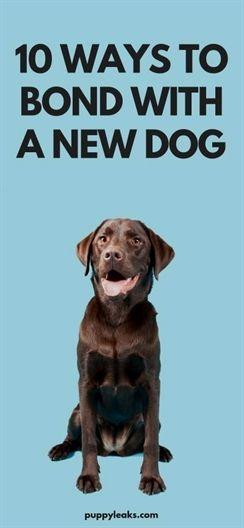 Dog Training Facility Dog Training Up Companion Dog Obedience