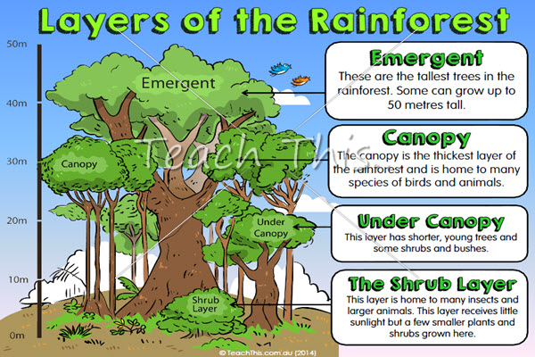 Influential image pertaining to layers of the rainforest printable