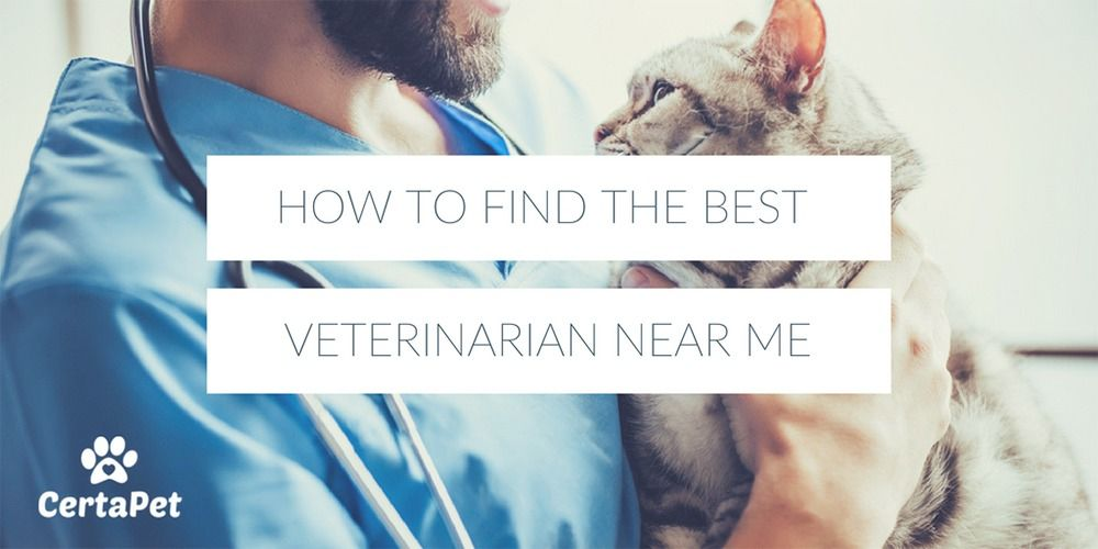 How To Find The Best Veterinarian Near Me Certapet Veterinarian Certapet Veterinary Services