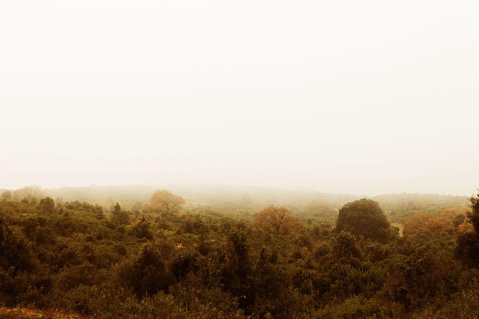 Nebbia mattutina.