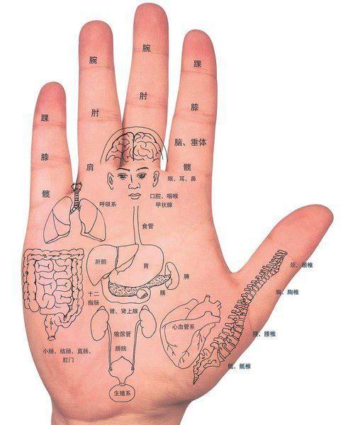 Reflexzonetherapie, reflexologie, handreflex