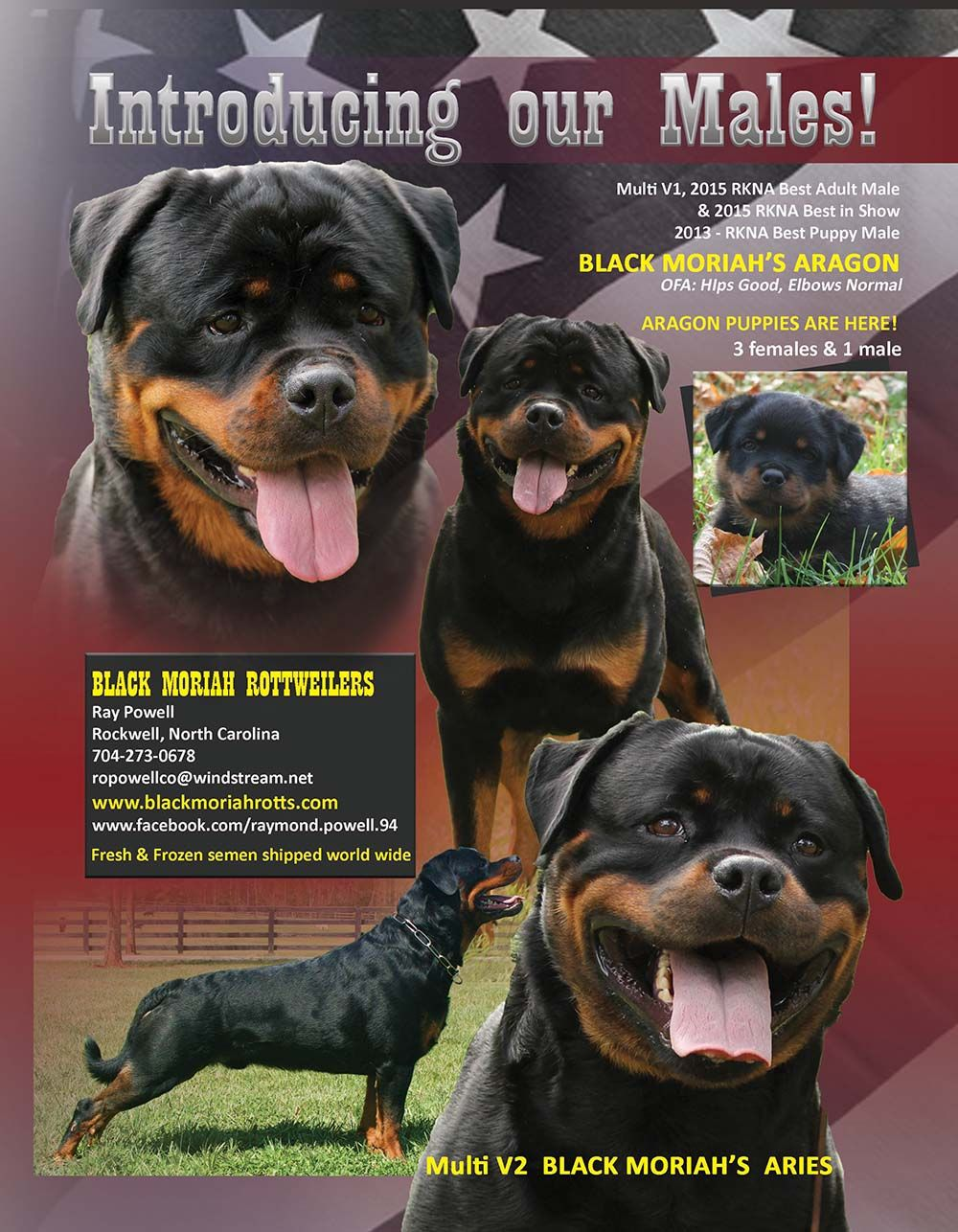 Introducing Our Males Multi V1 Rkna Best Adult Male Best In