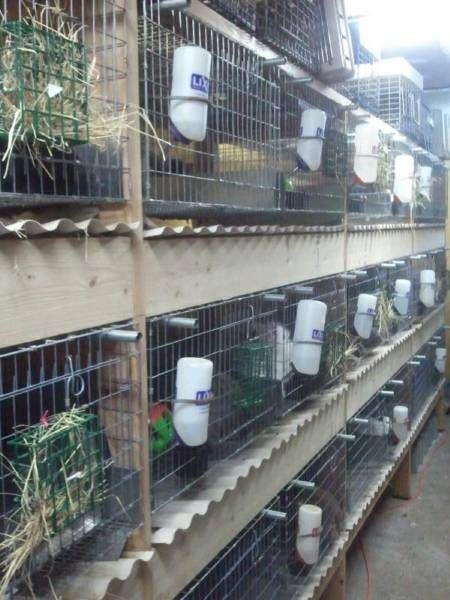 Rabbitry Rebuild Rabbitry Meat Rabbits Rabbit Farm