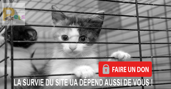 http://www.urgenceanimaux.com/contribution_ua.php