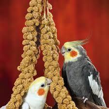 Cockatiels Go Crazy For Millet Sticks They Love Love Love It Pet Birds Cockatiel Pet Cancer