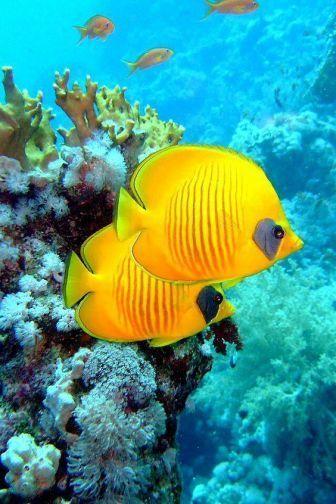 1 Colors Foto Beautiful Sea Creatures Marine Fish Tropical Fish